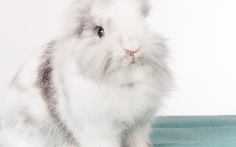 płciowe młode króliki xxx gorące cipki fotki