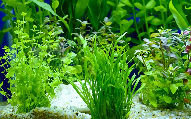 Nowość Podłoża pod rośliny akwariowe - Sklep zoologiczny ZOO-MAR UA09
