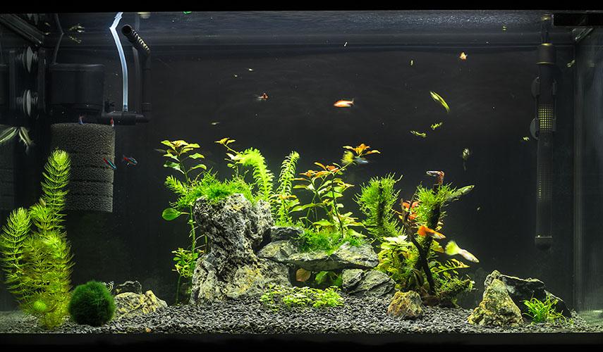 Как правильно выбрать аквариум для рыб